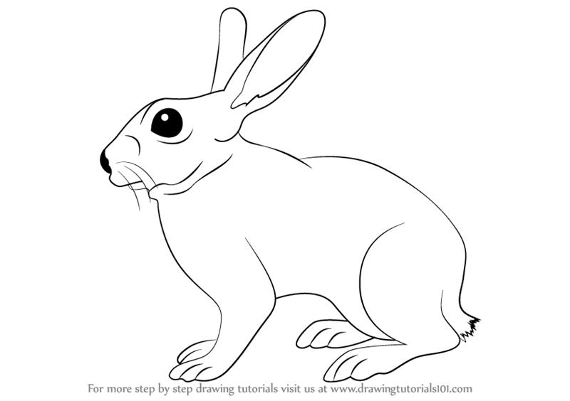 Drawn rabbit mammal Learn Tutorials Draw Drawing to
