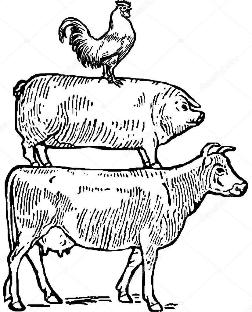 Drawn pig Drawn Cow Vintage cow and — and