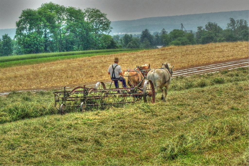 Drawn farm Horse Flickr County Horse farm