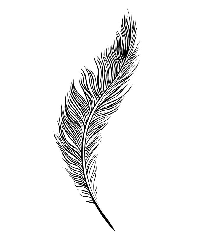 Drawn feather #2