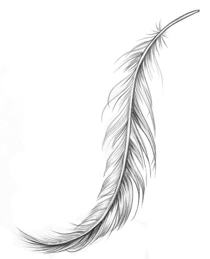 Drawn feather #3