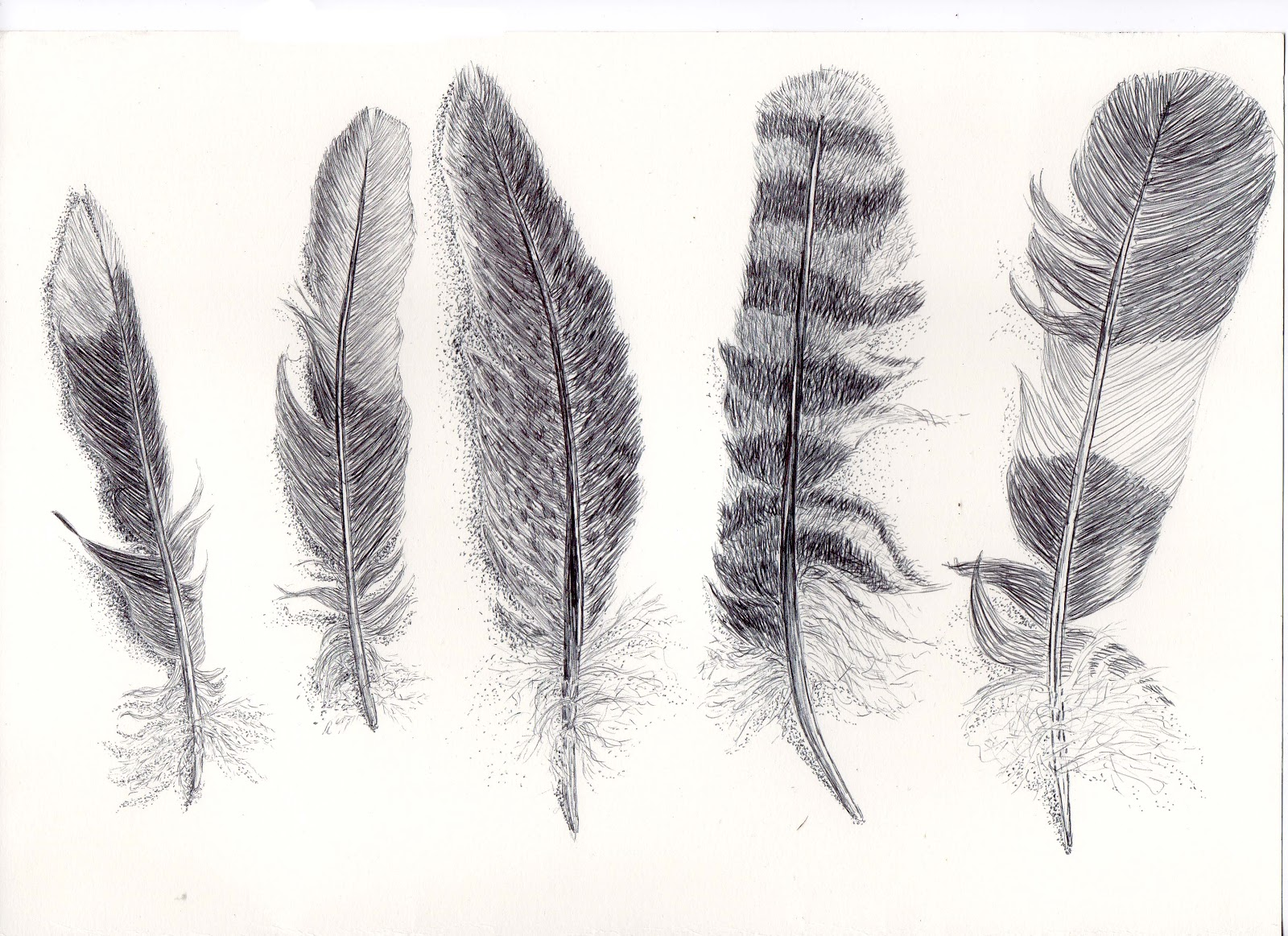 Drawn feather #14