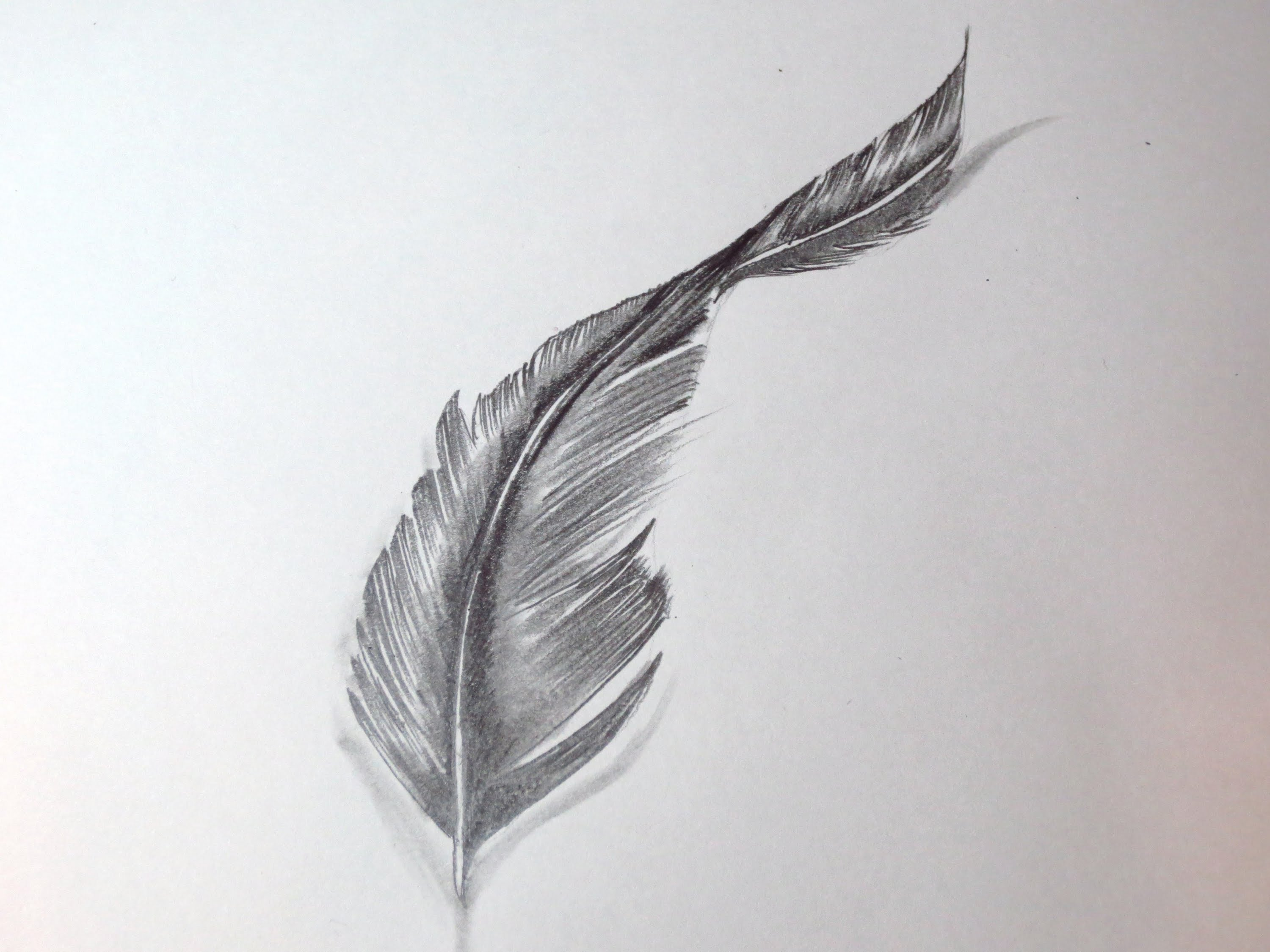 Drawn feather  A How To Draw