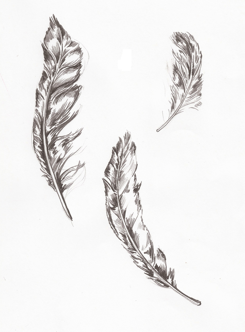 Drawn feather Drawings Sketchbooks Song Pin All