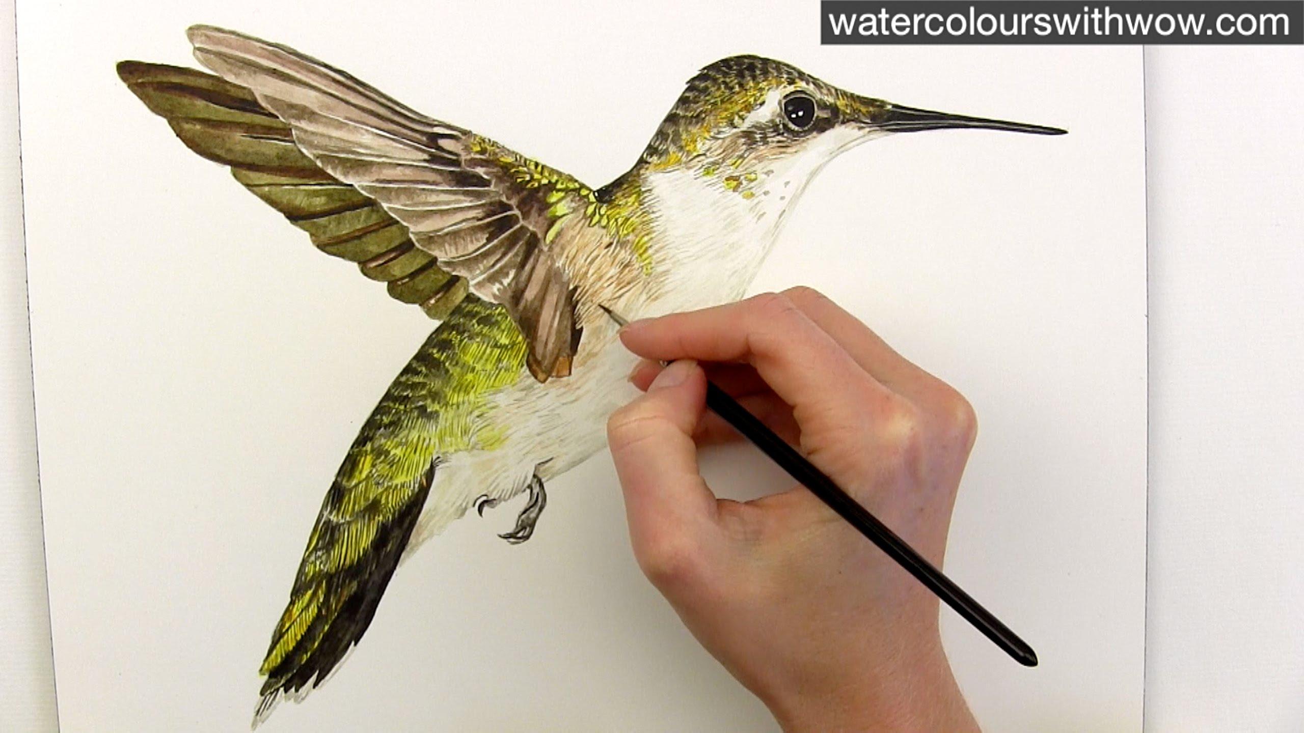 Drawn hummingbird anna's hummingbird YouTube in in hummingbird paint