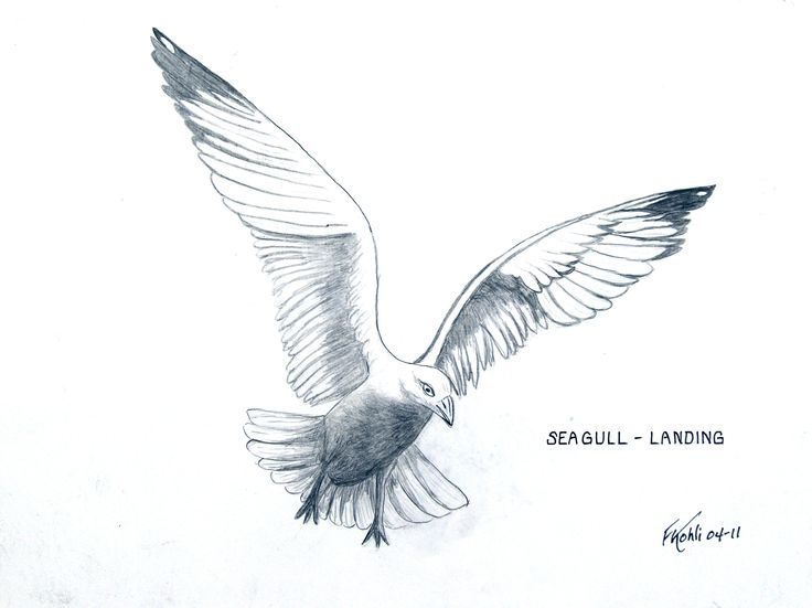 Drawn seagull seagul Seagull best 32 For prints