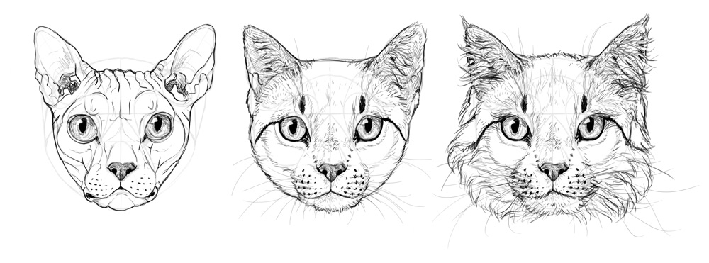 Drawn cat step by step #11