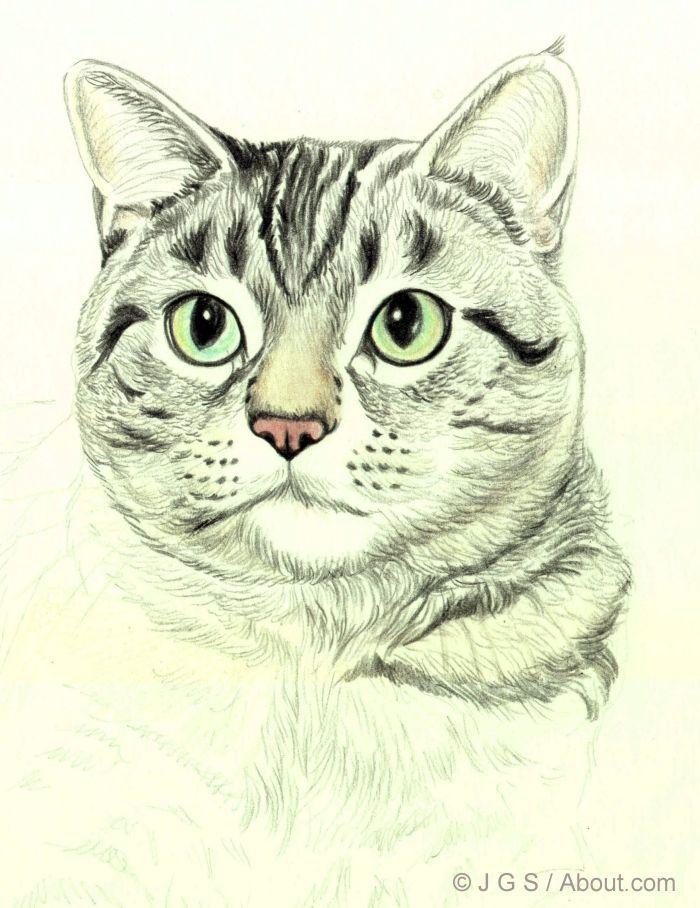 Drawn feline How Pencil Add to Draw
