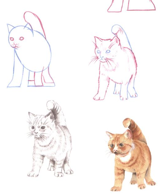 Drawn cat step by step #7