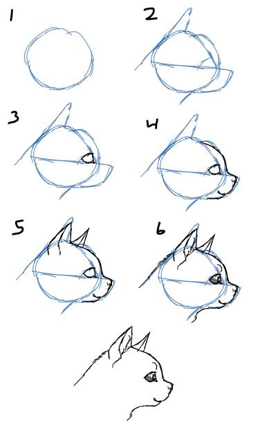 Drawn profile cat Draw drawing How View about