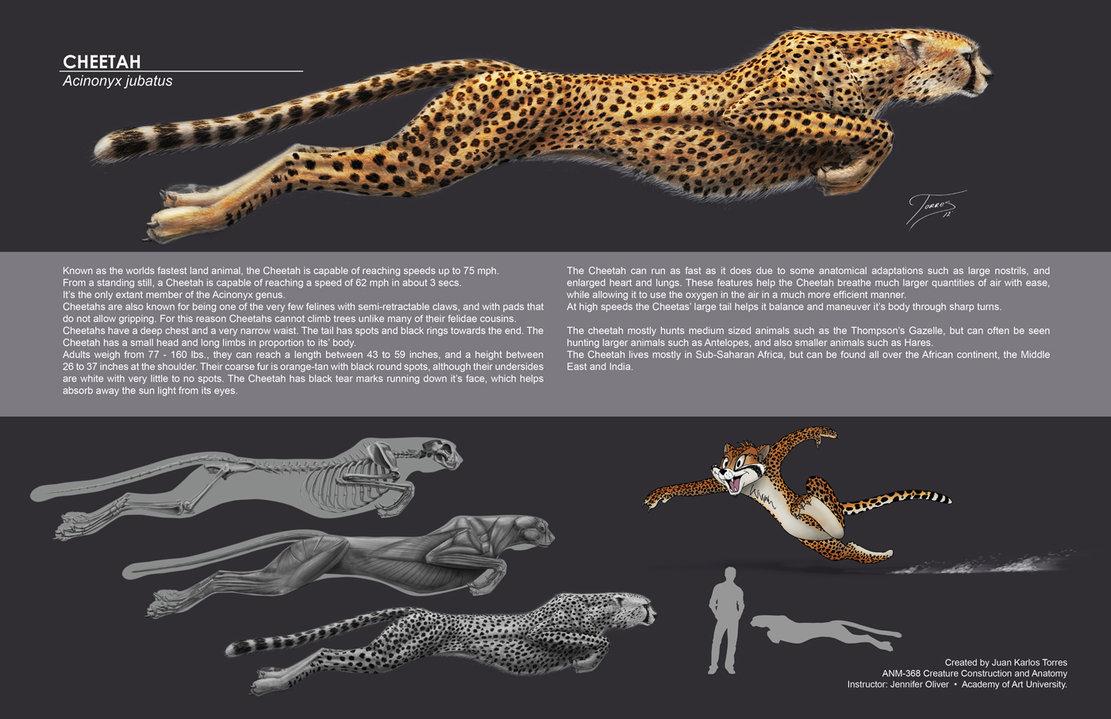 Drawn hunting cheetah Drawing Cat leopard cat felines