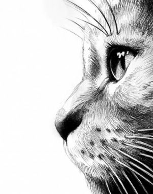 Drawn profile perfect Best Cat 25+ drawing ideas