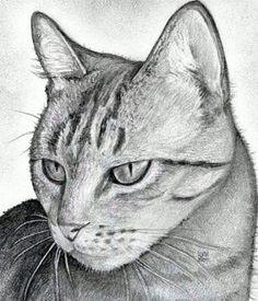 Drawn animal kitten #5