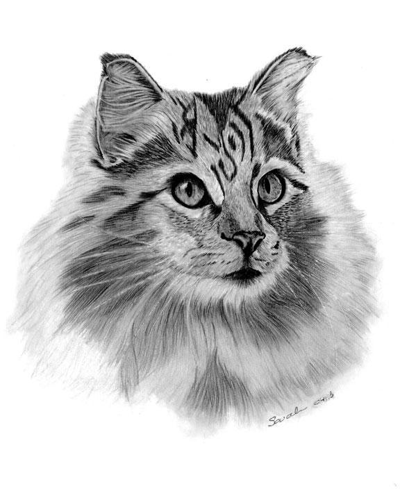 Drawn animal graphite drawing #2