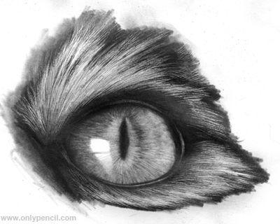 Drawn animal graphite drawing #3