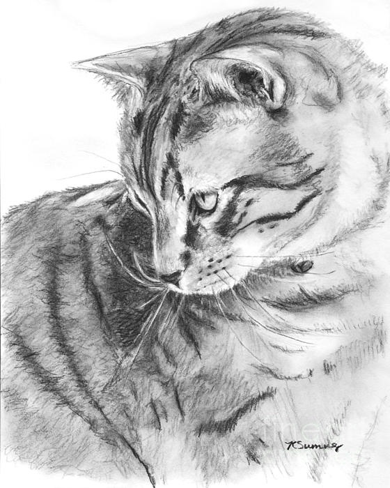 Drawn profile cat In Tabby Tabby 45 cats