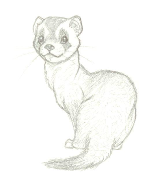 Drawn ferret On on @deviantART wolfypuppy by