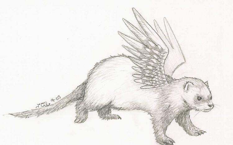 Drawn ferret Angel by by Angel Ferret