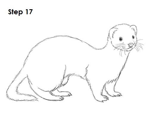 Drawn ferret 17  * 17 Drawing