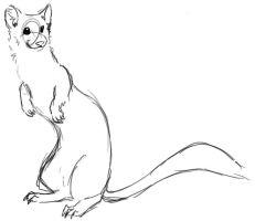Drawn ferret Wolfypuppy on zippytear by by