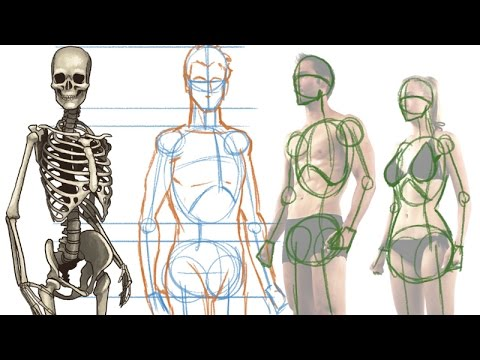 Drawn figurine human being Figure YouTube How the Human