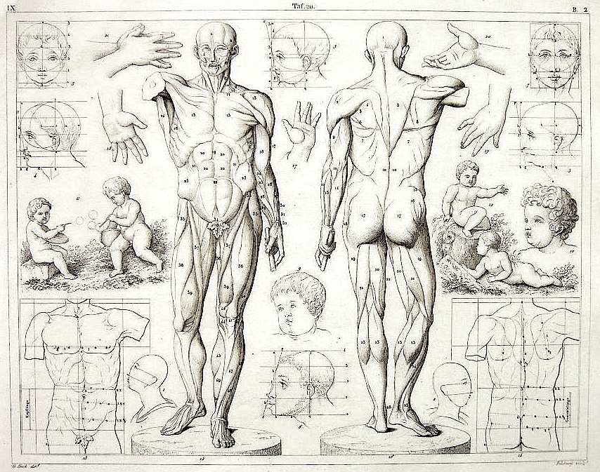 Drawn figurine human body structure Anatomy Anatomy Collection Figure Images