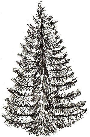 Drawn fir tree Tree it and kids Draw