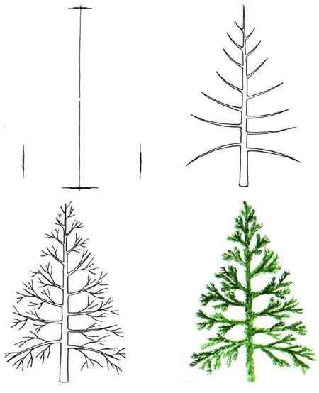Drawn fir tree With  Draw Draw Step