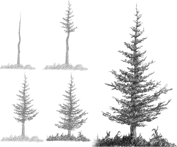 Drawn fir tree Below Trees Nature Book Paint