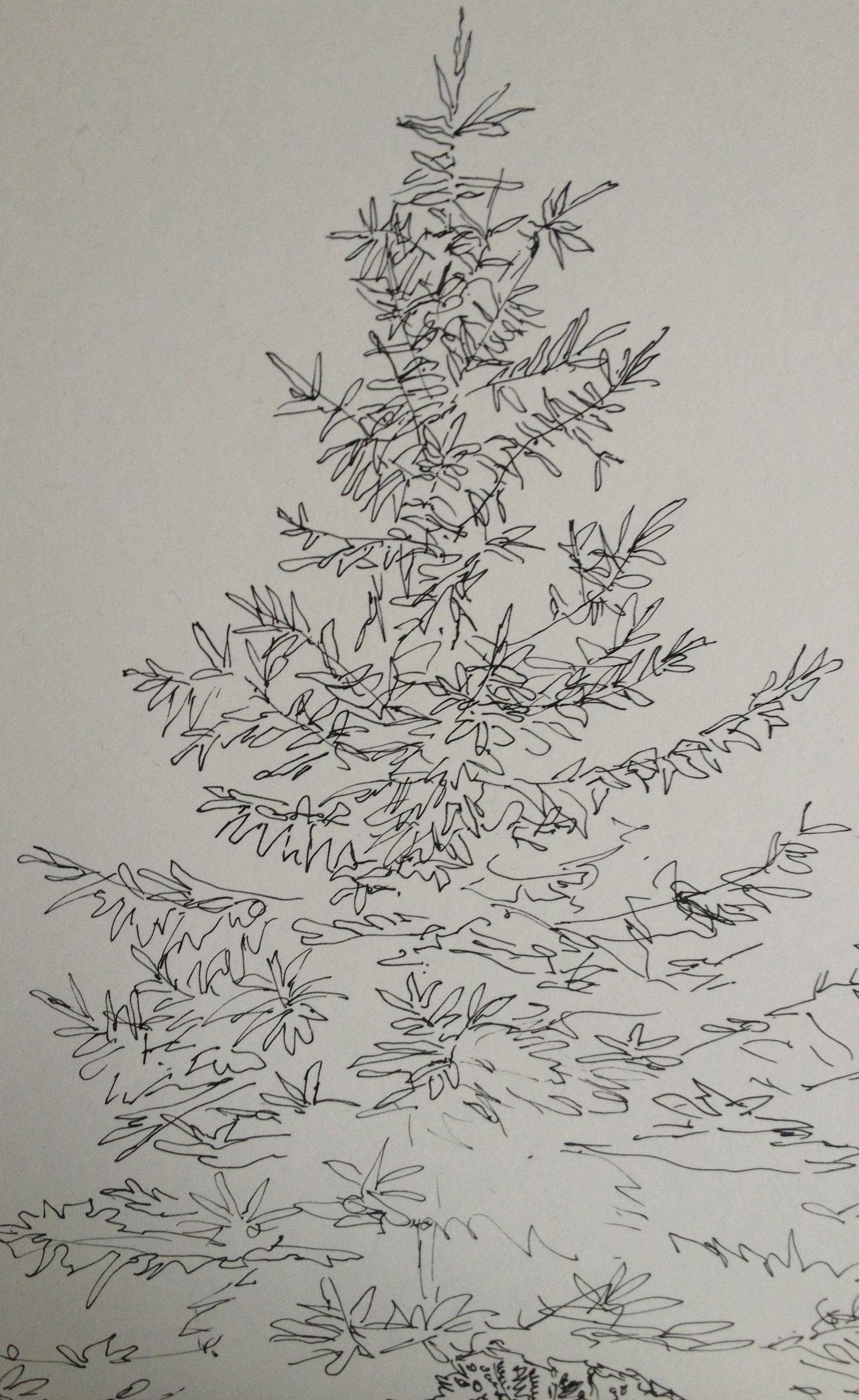 Drawn pine tree huge Huge of bright drawing suddenly