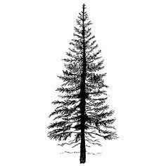 Drawn fir tree line drawing Easter Search  douglas fir