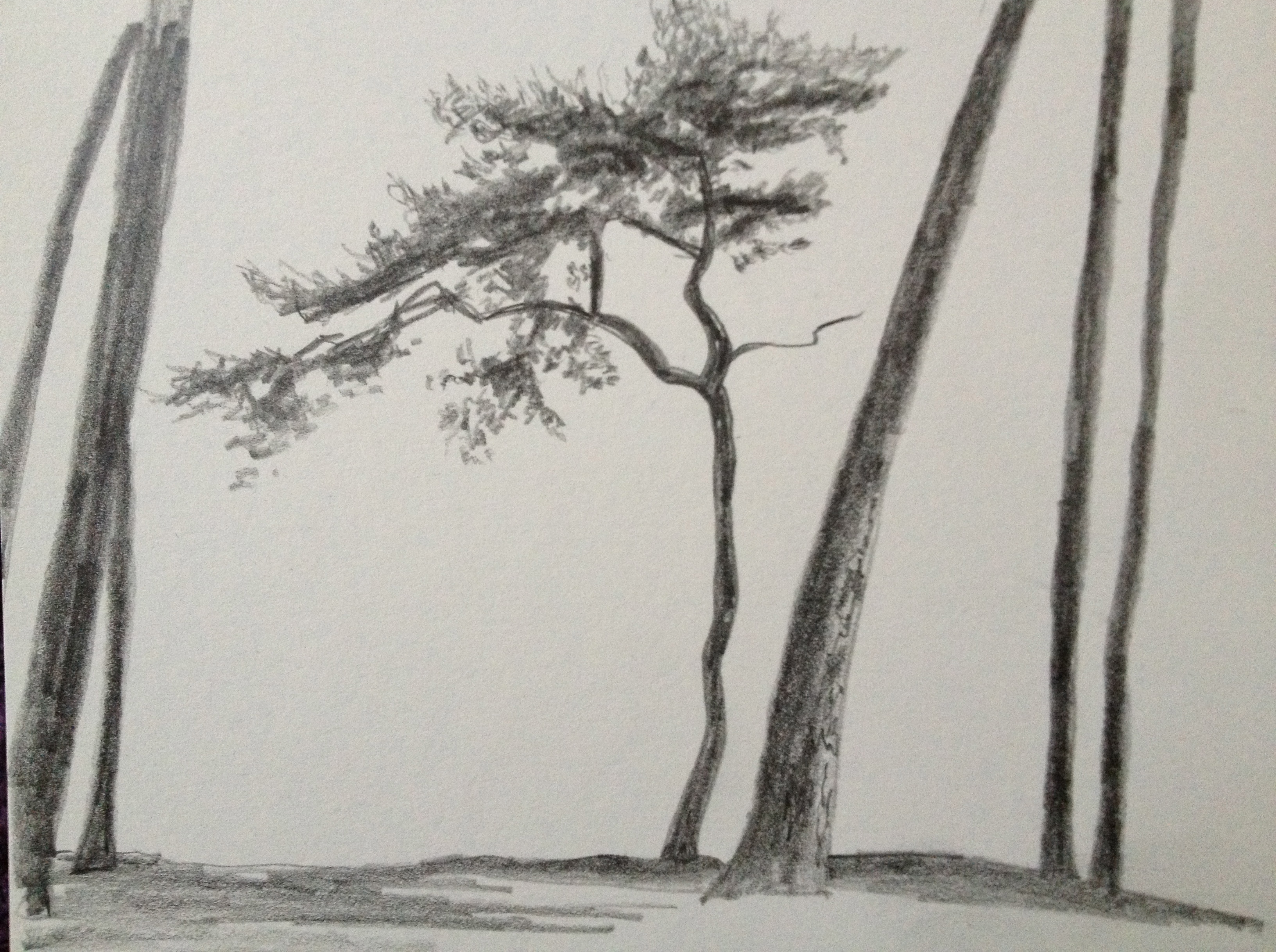 Drawn pine tree snow covered tree Trees pine This drawing young