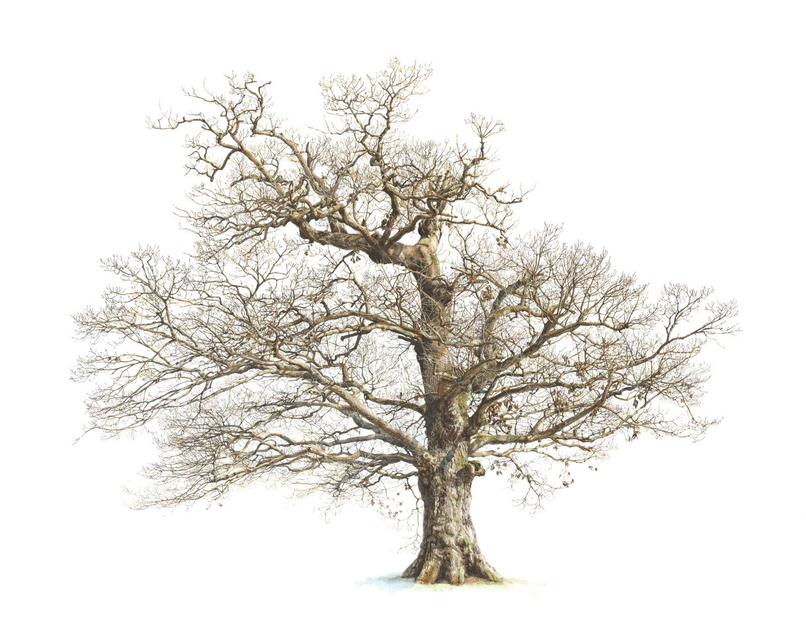 Drawn bush plane tree Drawing > Tree > Tree