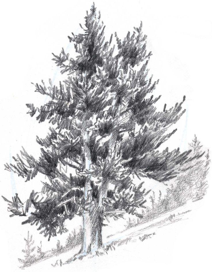 Drawn fir tree realistic Bushes Rocks Draw to