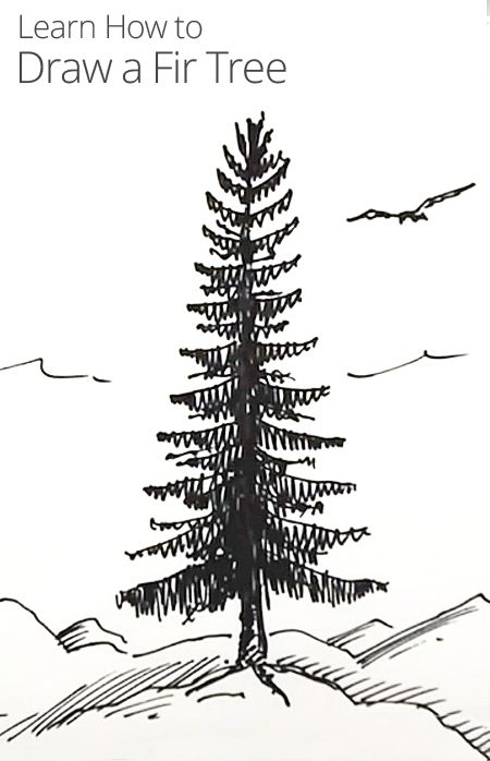 Drawn fir tree realistic Draw Rayner Lessons In 142