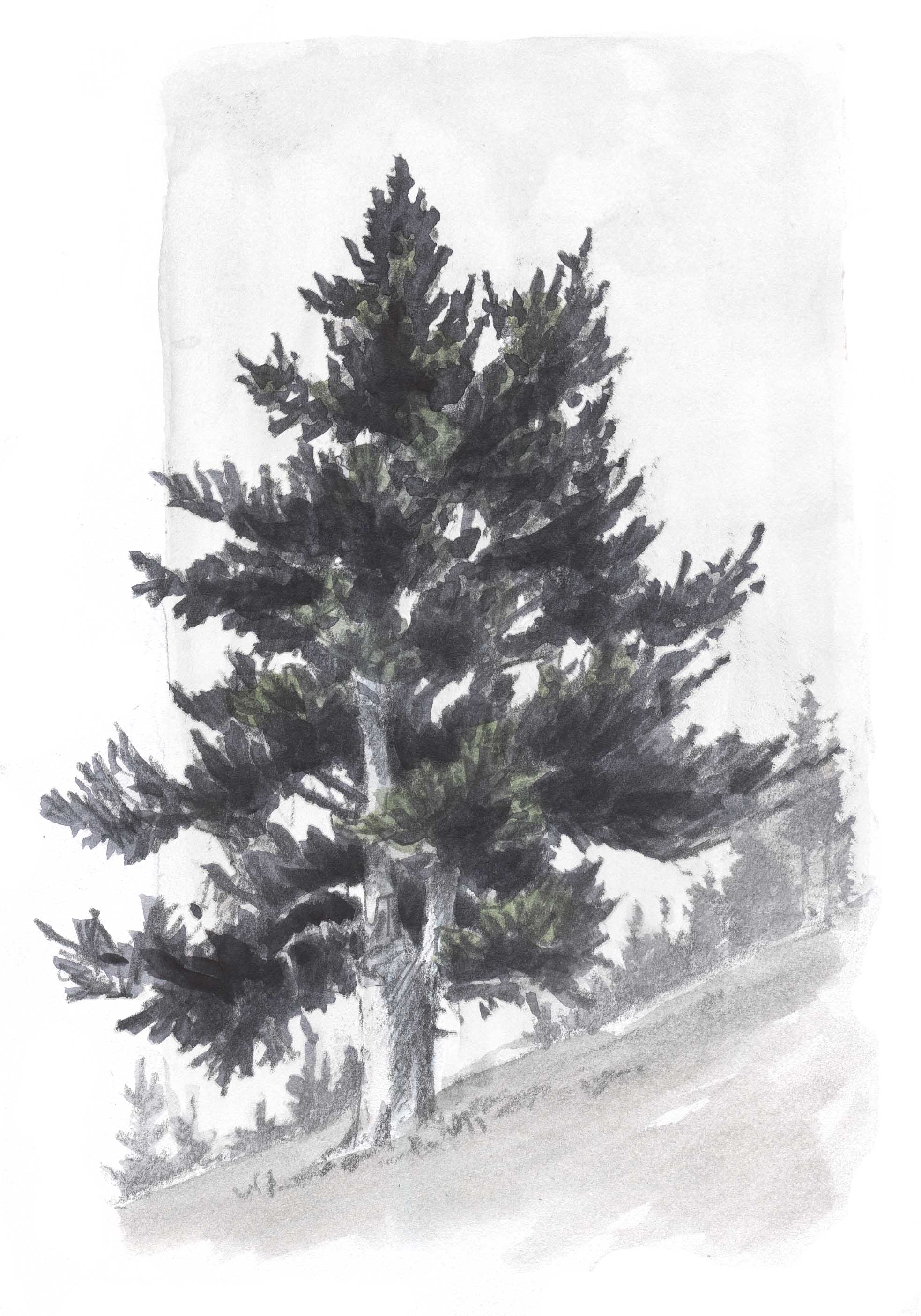 Drawn fir tree realistic Google to how to Search