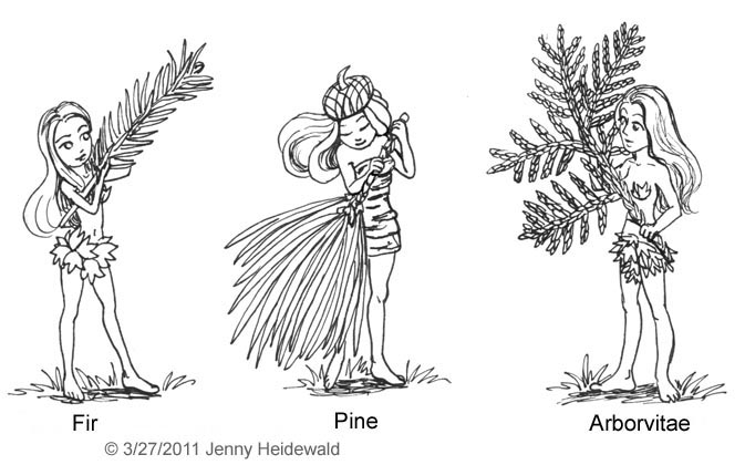 Drawn fir tree line drawing EMG Trees Dryads Zine and