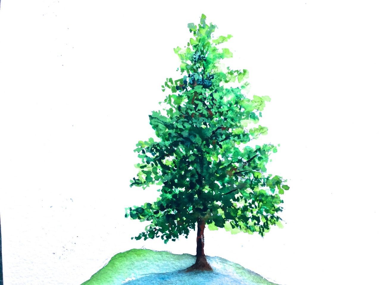 Drawn pine tree watercolor Pine paint tutorial watercolor tutorial
