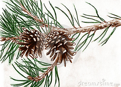 Branch clipart pinecone Tree Free Branch Image: On