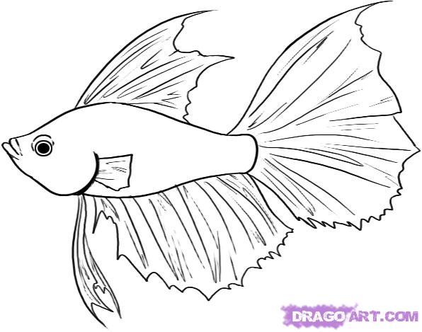 Drawn fish #9