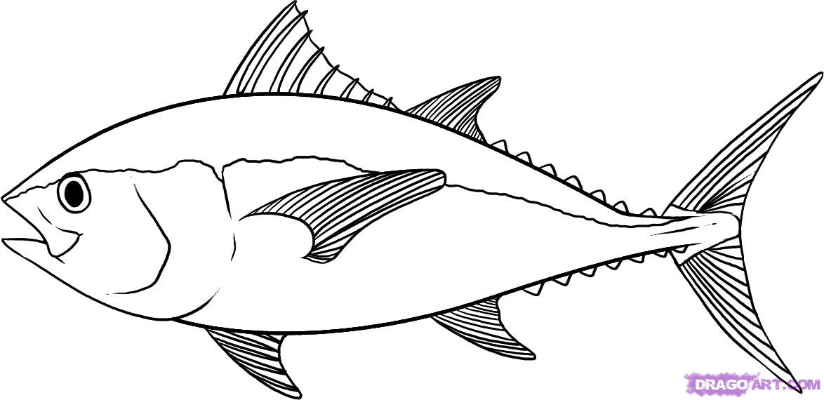 Drawn fish Outline Vectors Drawing Clipart &
