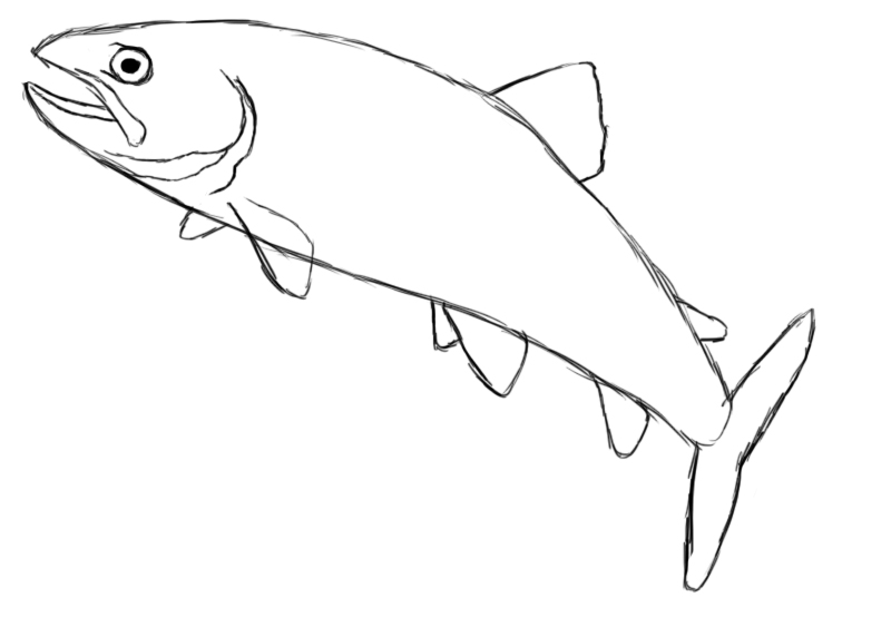 Drawn fish Step did difference repeating that