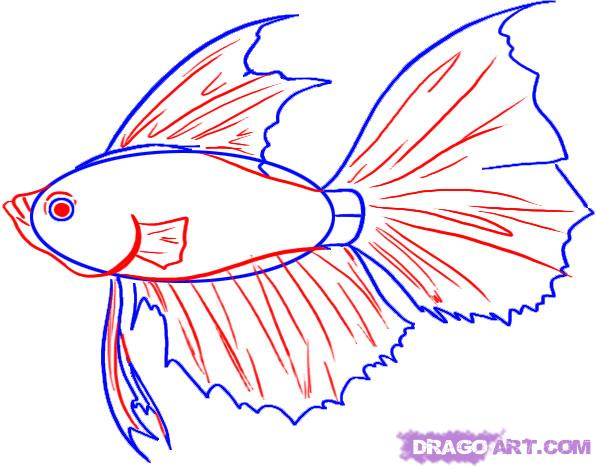 Fins clipart fish drawing Draw by FREE How Step