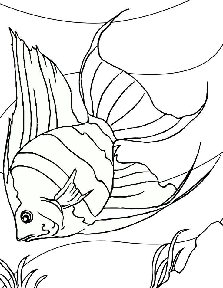 Angelfish clipart beautiful fish Best Pinterest 2097 Angelfish images