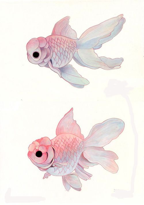Drawn goldfish coloured fish On 20+ Fish Fish Pinterest