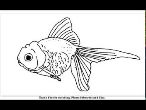Drawn goldfish golden fish A YouTube How to Beautiful