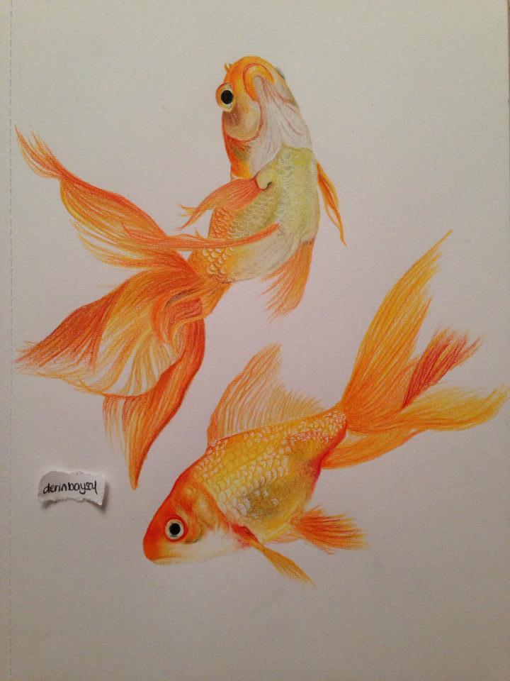 Drawn goldfish fancy goldfish Pencils Prismacolor Goldfish Premier Pencils