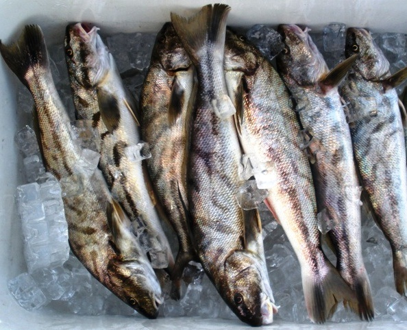 Drawn fishing market Assignment emma Drawn Fish loves