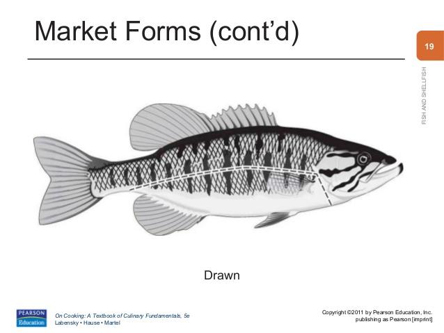 Drawn fishing market 19 Market Chapter
