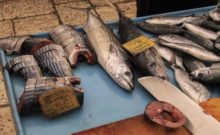 Drawn fishing market Darkroom Gallery Michael Havice Feast